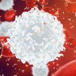 Американский регулятор разрешил терапию рака «обученными» лейкоцитами