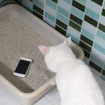 Экскременты и синегнойная палочка: как правильно дезинфицировать ваш телефон