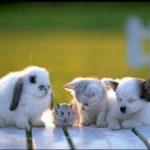 Домашние животные помогают справиться со стрессом