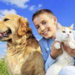 Неврозы распространяются на домашних животных