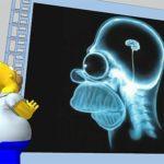 Аэробные упражнения увеличивают объем мозга