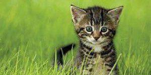 Кошачьи экскременты содержат ключ к лечению рака