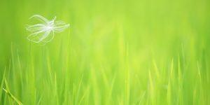 Изменения климата делают нашу аллергию тяжелее