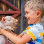 Жизнь возле фермы снижает риск аллергии
