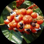 Состав зеленого кофе для похудения ExtraGreen