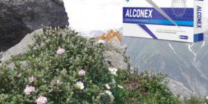 Alconex от алкоголизма — обман или нет? Реальные и негативные отзывы. Где купить и цена.