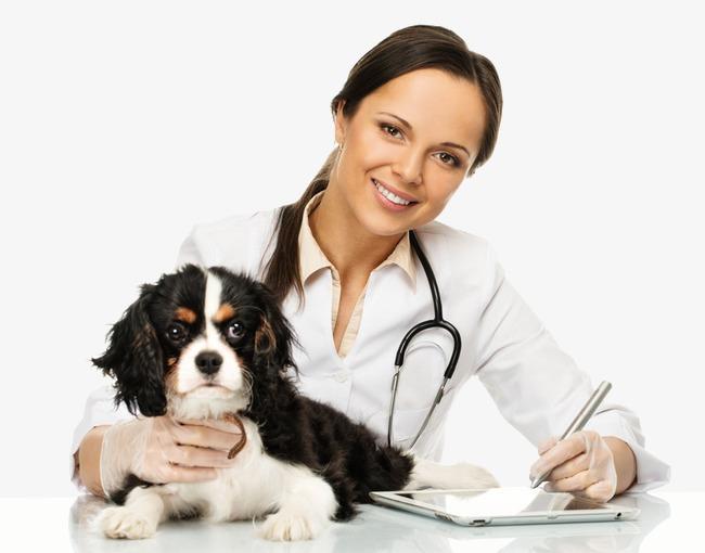 Clean Dog отзывы специалистов