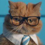 Паразит из кошачьих экскрементов может сделать вас предпринимателем