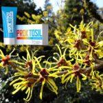 Proctosil от геморроя — отзывы, цена, где купить
