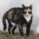 Мужчина заразился особо опасной инфекцией от своего кота