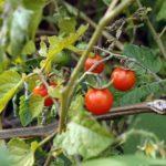 Органические продукты связали со снижением риска рака