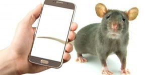 Стоит ли бояться рака от мобильного телефона, если вы не самец крысы?