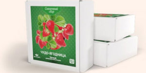 Чудо ягодница – набор для выращивания клубники на подоконнике