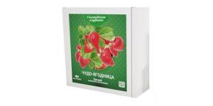 Чудо-ягодница Голландская клубника: первый урожай уже через 3 недели!