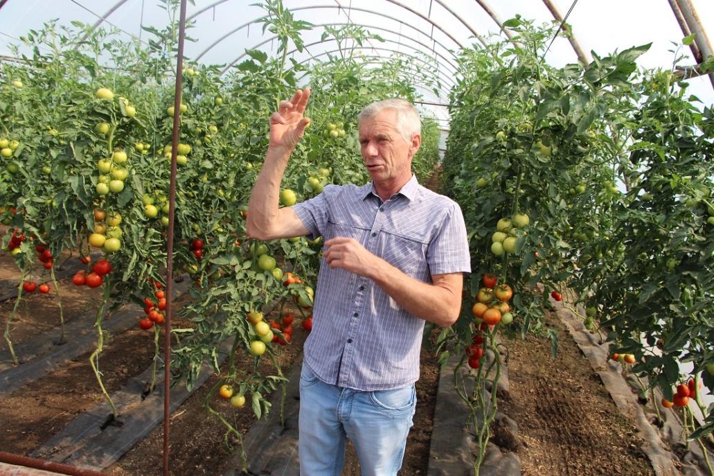 Домашние свежие овощи отзывы специалистов
