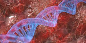 Генетика в большинстве случаев плохо предсказывает риск болезней