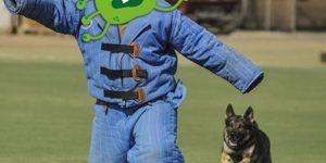 Собак обучат обнаруживать COVID-19