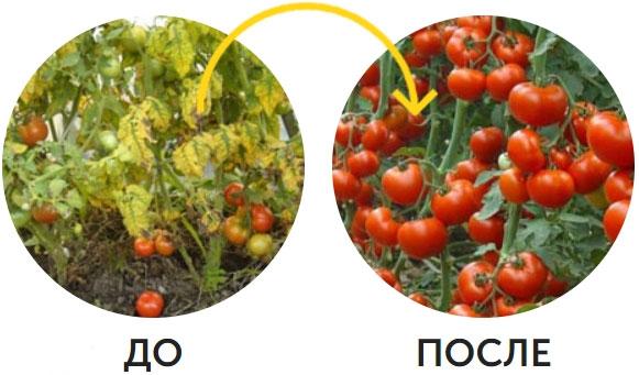 пример использования с помидором