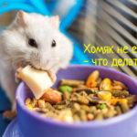 Что делать, если хомяк не ест
