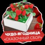 Чудо-ягодница «Сказочный сбор»