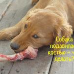 Собака подавилась костью – что делать