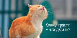 Кошку сильно трясет – что делать