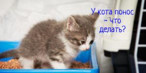 Если у кота понос – что делать?