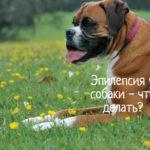 Что делать, если у собаки эпилепсия