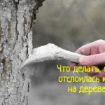 Что делать, если на дереве отслаивается кора