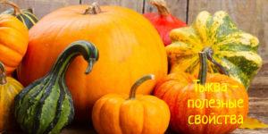 Полезные свойства масла и семян тыквы