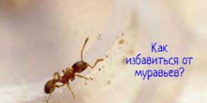 Что делать, как избавиться от муравьев