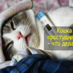 Кошка простудилась - причины, симптомы, что делать
