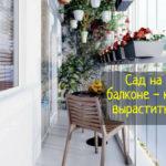 Сад на балконе - что делать, советы