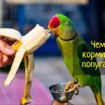Советы по питанию попугаев - что можно и нельзя
