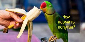 Советы по питанию попугаев — что можно и нельзя