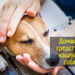Кашель у собаки - домашние народные средства