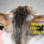Причины появления залысин у кошки